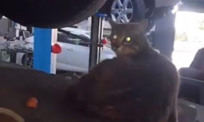 Miagolio nell'auto, la porta in officina: mamma gatto stava partorendo – VIDEO