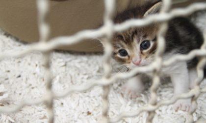 Rovigo: l'amministrazione compie diversi interventi all'oasi felina di via De Polzer