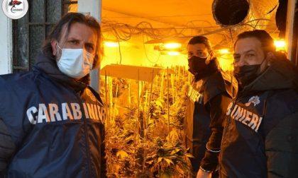 Maxi sequestro di droga a Lendinara per un valore medio di mercato stimato in 934.000 euro