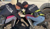 """Fermati a Rovigo """"i signori della droga"""", nel camion trasportavano 10kg di coca: avrebbero fruttato 4 milioni di euro"""