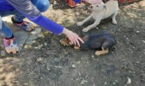 Cuccioli prigionieri in recinti minuscoli tra lamiere arrugginite