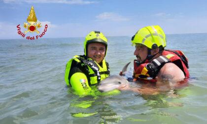 Le commoventi foto del cucciolo di delfino spiaggiato a Rosolina: non ce l'ha fatta