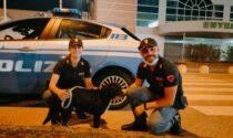 """Flash ma anche """"passista"""": il cucciolo in fuga da quattro giorni aveva percorso circa 50 chilometri"""