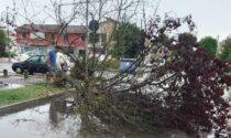Ondata di maltempo nel Delta: numerosi alberi sradicati a Porto Tolle