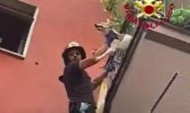 Cane incastrato appeso al balcone: il video del salvataggio dei pompieri