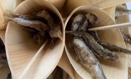Stop al fermo pesca in Adriatico, torna il pesce fresco a tavola